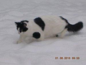 Cat enjoying snow in Birmingham UK